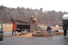 Finishing-up-a-tree-take-down