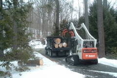 Removing  logs from the site