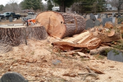 Large-Pine-Removal:-Union-Cemetery