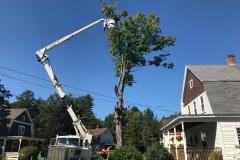 Removing-a-hazard-tree
