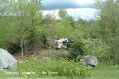 Removing-poor-quality-trees-in-the-forest