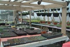 Early spring seeding